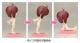 キューポッシュ/キューポッシュフレンズ/キューポッシュフレンズ アン-Anne- 塗装済み可動フィギュア