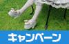 [キャンペーン]『ゴールデンウィークキャンペーン2017』LittleWorld おしゃれは足元からキャンペーン